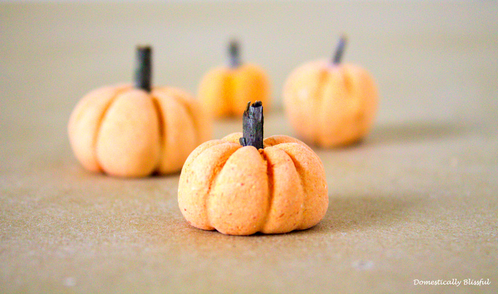 Mini Pumpkin Patch