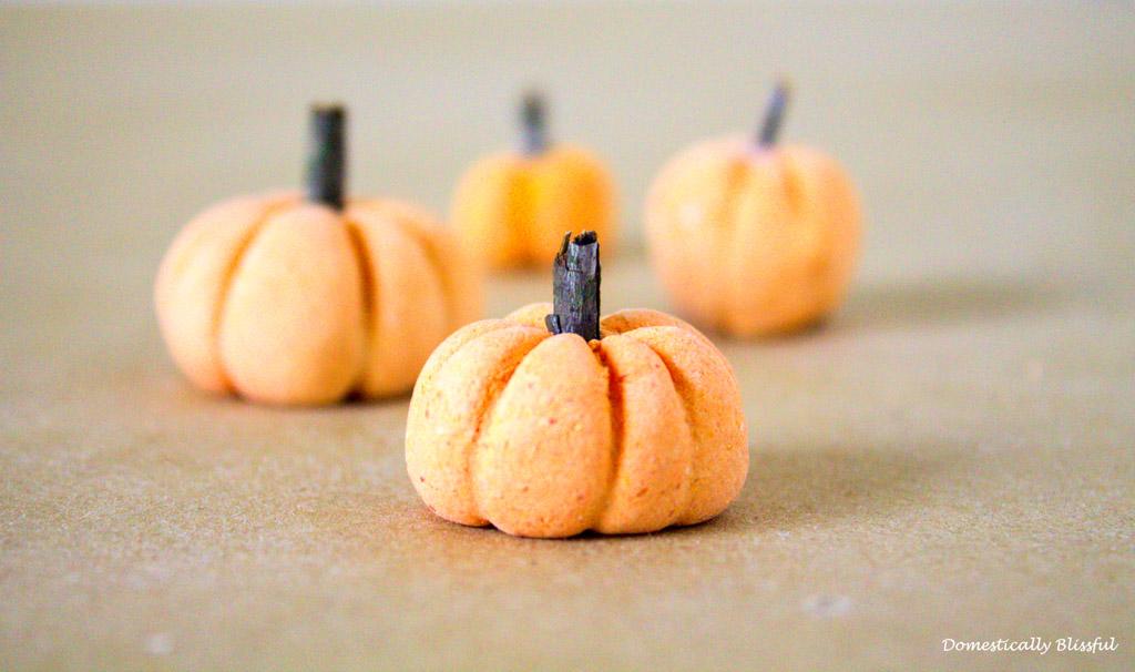 Mini Pumpkin Patch