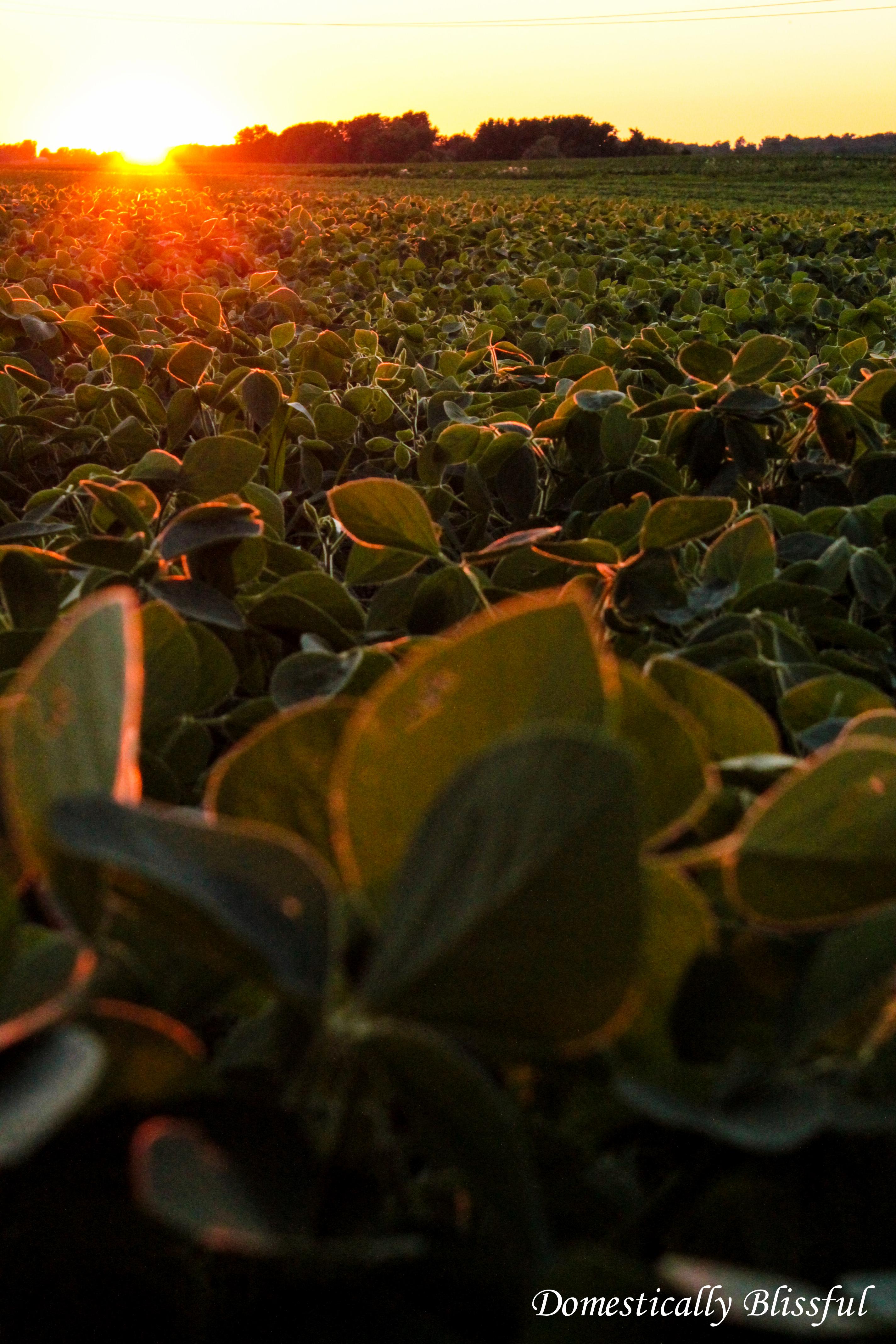 Sunset on the Ohio Farm