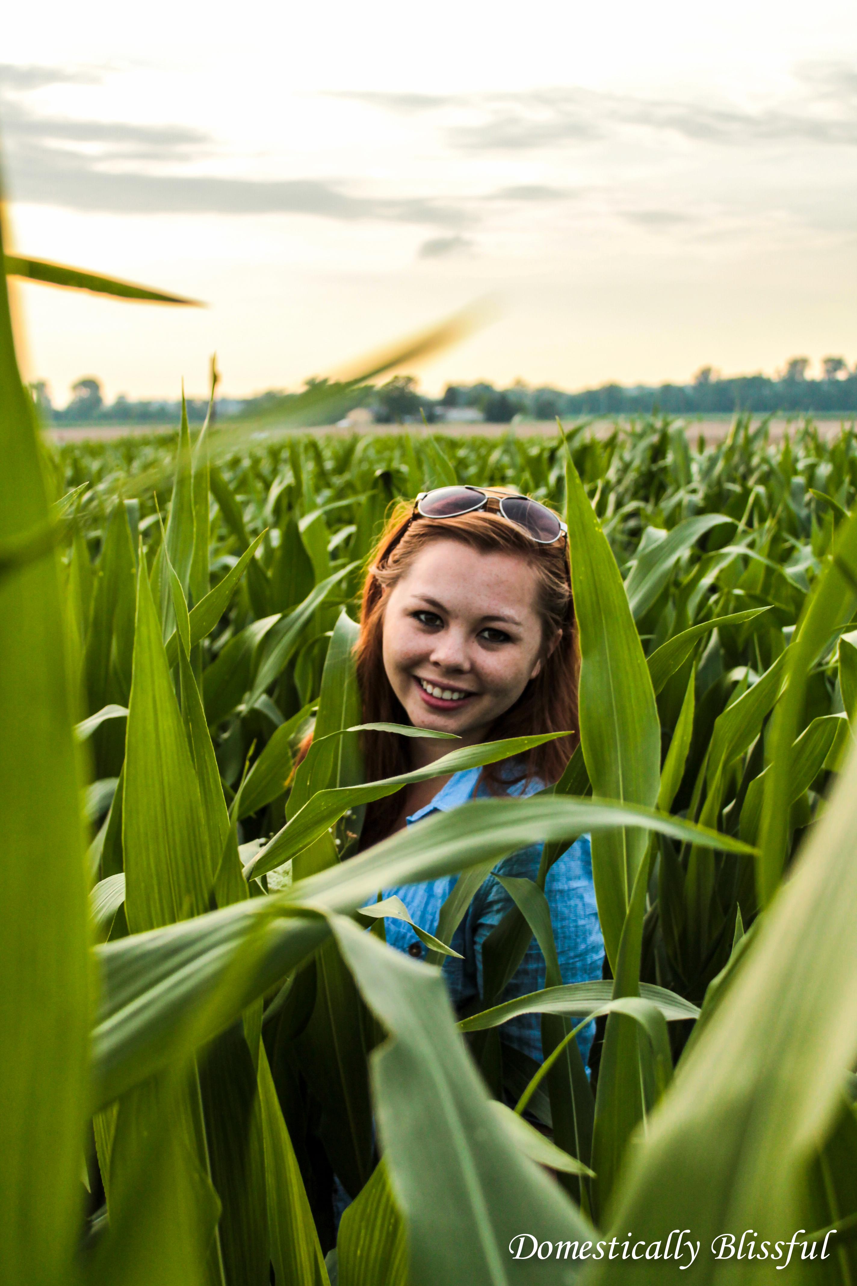 Tall Corn in Ohio