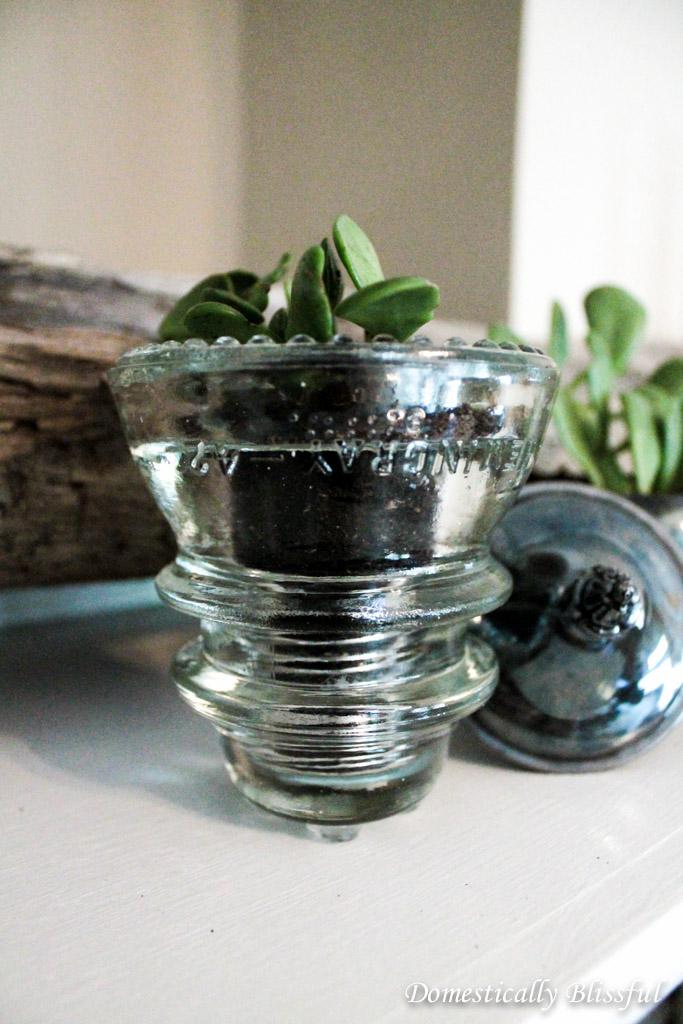 Succulent in Glass Insulator