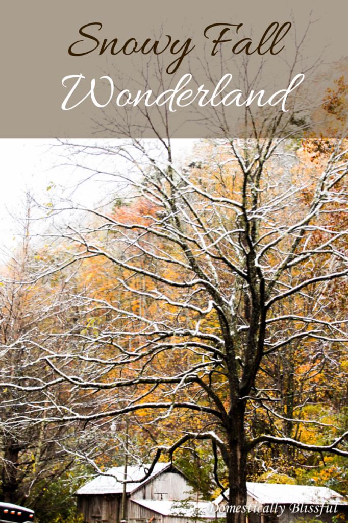 Snowy Fall Wonderland