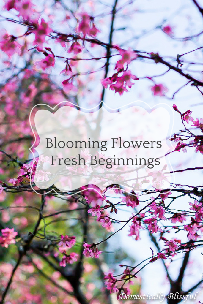 Blooming Flowers Fresh Beginnings