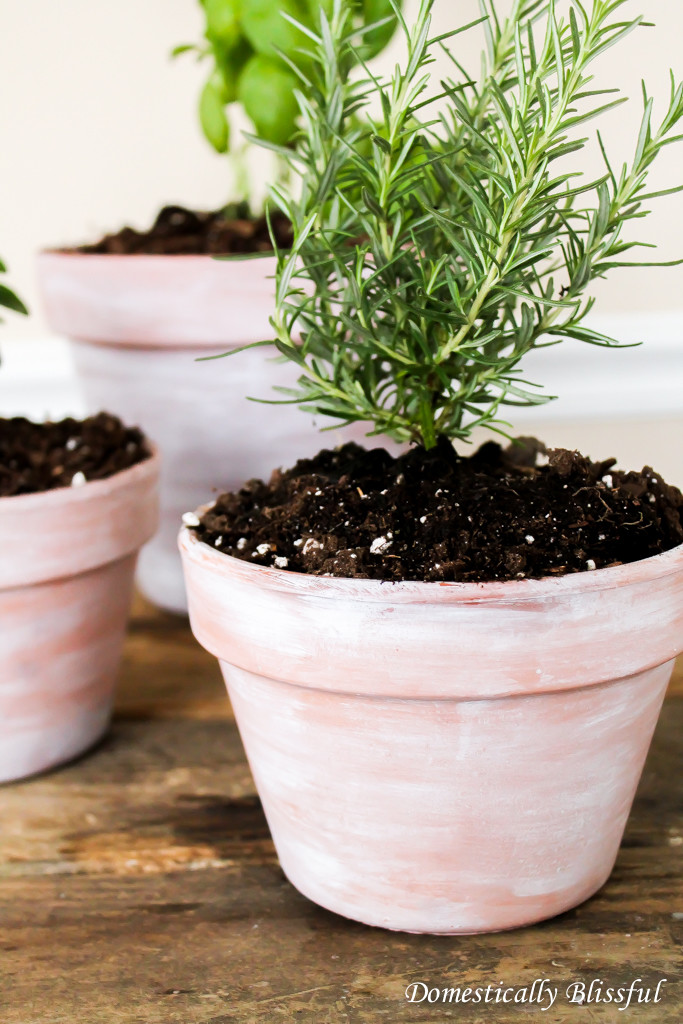 Give your indoor garden pots something to dream about with these DIY Dreamy Herb Garden Pots!