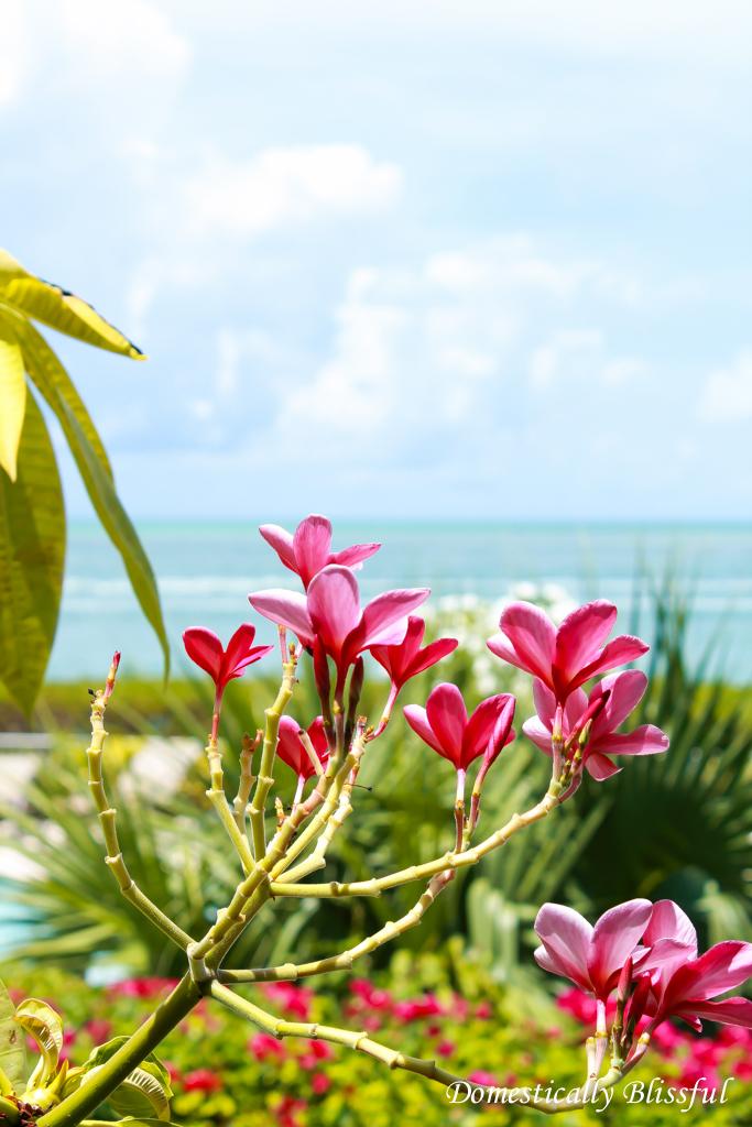 Depth perception focused on pink tree flowers
