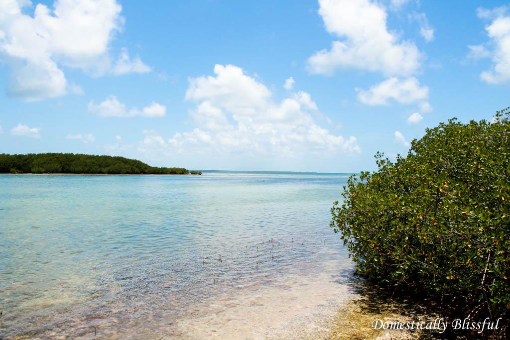 Florida Keys Ocean