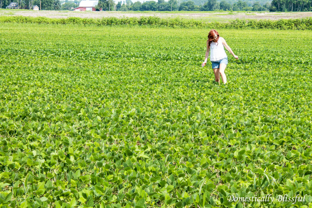 Collecting lost golf balls in bean fields of Ohio