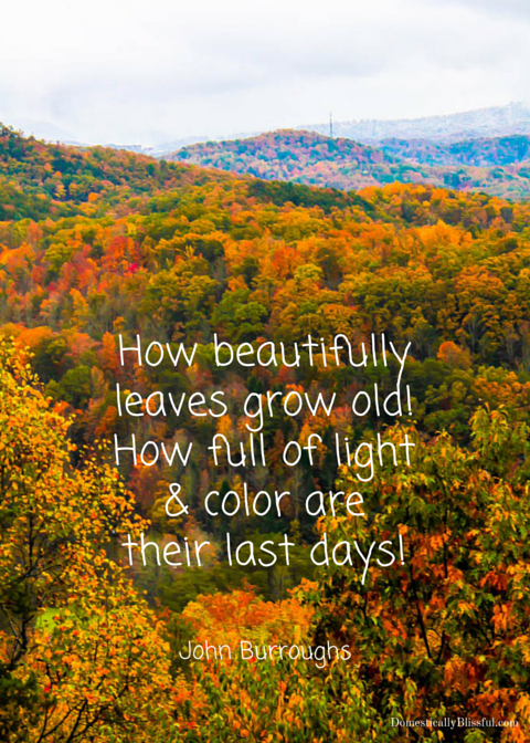 How beautifully leaves grow old How full of light and color are their last days
