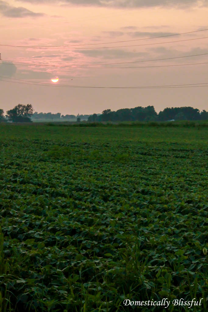 Sunset over the bean fields of Ohio