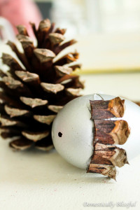 Pinecone on acorn