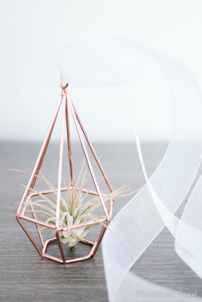 Create your own air plant rearview mirror decor to add a little simple charm to your car.