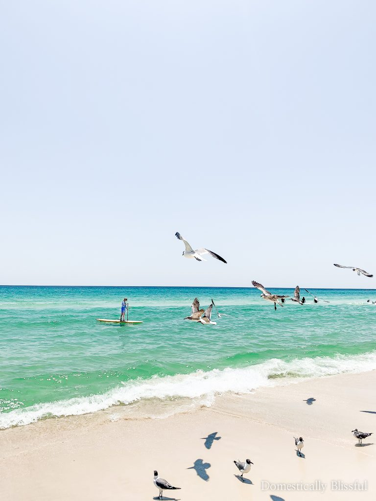 5 reasons to visit Panama City Beach this summer & 10 fun things to do in Panama City Beach!