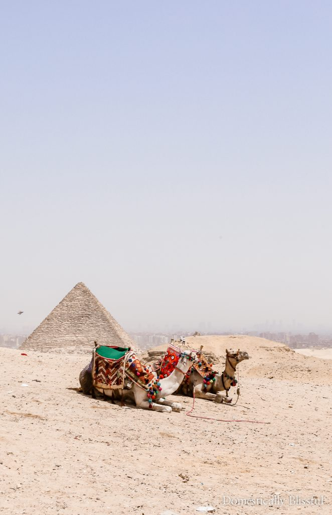 25 photos to inspire you to visit Egypt this year for an adventure of a lifetime!