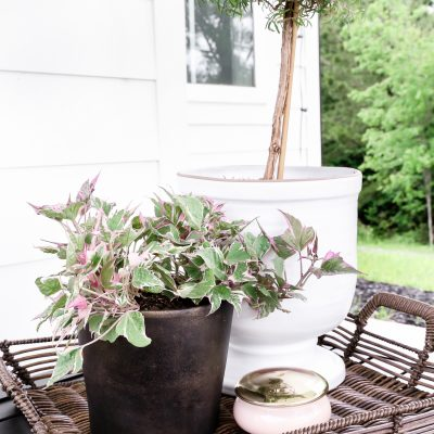 DIY Black Aged Terra Cotta Pots